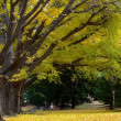 Yellow deciduous in autumn — Stockfoto #2363740