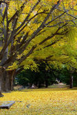 Yellow deciduous in autumn — Stockfoto