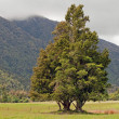 Stock Photo: Single old tree on field with mountain