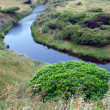 Stock Photo: Calm river and bright green tree
