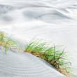 Grass on the dune, Golden bay in NZ — Stock Photo