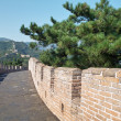 Stock Photo: Great wall with pine and blue sky