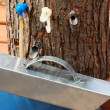 Stock Photo: Different maple sap taps