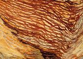 Worm wood closeup — Stock Photo
