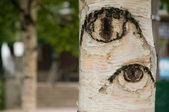 The trees have eyes horizontal — Stock Photo