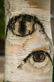 The trees have eyes macro — Stock Photo