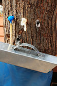 Different maple sap taps — Stock Photo