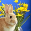 Easter bunny and yellow tulips — Stock Photo