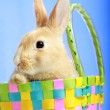Easter bunny in a basket — Stock Photo #2514281