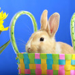 Easter bunny and yellow tulips — Stock Photo #2514290