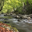 River in the forest — Stock Photo #1943085
