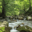 River in the forest — Stockfoto