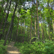 Green forest — Stock Photo #1943502