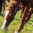 Royalty-Free Stock Photo: Horse grazing