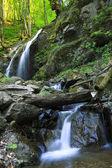 在森林里的河 — 图库照片