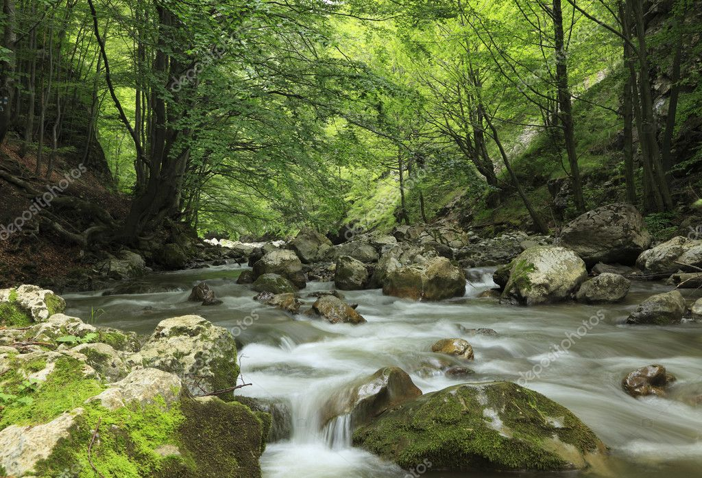 Image of a river in a cool summer forest.  Stock Photo #1943274