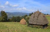 Krajobraz Transylwanii — Zdjęcie stockowe