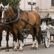 Stock Photo: Horses and carriage in Prague