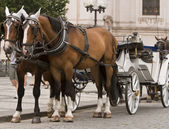 Horses and carriage in Prague — Stock Photo