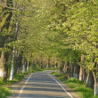 Road in a summer park - Stock Photo