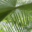 Abstract palm - Stock Photo