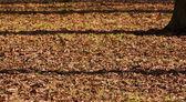Fall shadows — Stock Photo