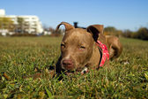 Watching you — Stock Photo