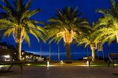 Palm-trees — Stock Photo
