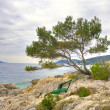 Lonely pine tree — Stock Photo #2027402