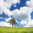 Single pine tree — Stock Photo #2126626