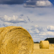 Round bale of straw — Stock Photo