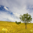 Stock Photo: Landscape with sparse trees