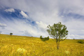Landscape with sparse trees — Stock Photo