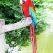 Stock Photo: Green Wings Macaw