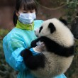 Woman feeding panda — Stock Photo