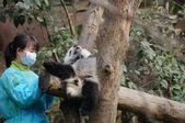 Kvinna utfodring panda — Stockfoto