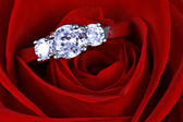 Wedding Ring in Rose, Will you marry me? — Stock Photo
