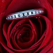 White gold diamond ring in rose - Foto de Stock  