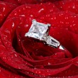 Stock Photo: White gold diamond ring in rose
