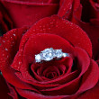 White gold diamond ring in rose - Stock Photo