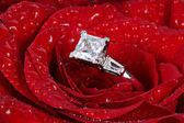 White gold diamond ring in rose — Stock Photo