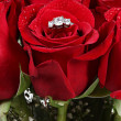 Stock Photo: Red rose with ring on white