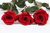 Three Red Roses on white — Stock Photo