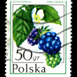 Royalty-Free Stock Photo: POLAND - CIRCA 1974: A postage stamp