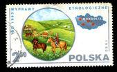 POLAND - CIRCA 1980: A postage stamp — Stock Photo