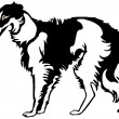 Stock Vector: Borzoi dog