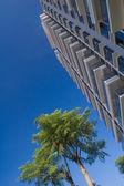 Edificio y árbol — Foto de Stock