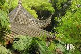 中国屋顶在树 — 图库照片