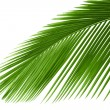 Leaves of palm tree — Stock Photo #1927961