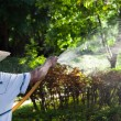 Watering garden with hand hose — Stock Photo